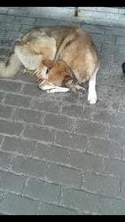 Отличный пёс ищет надежных хозяев!!!!