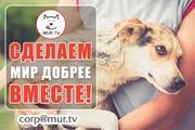 Животным помощь,  поддержка информационнаяя